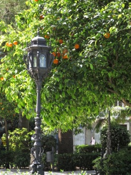 Orange trees line the streets
