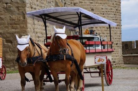 White hat carriage tour