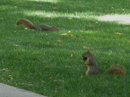 Campus squirrels